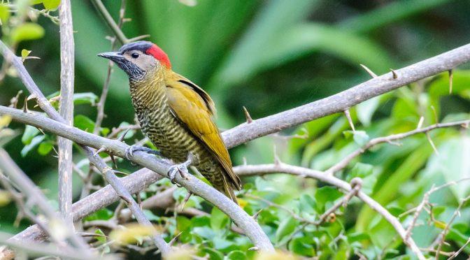 Le Costa Rica, un pays idyllique pour vivre de belles aventures